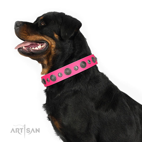 Impressive leather dog collar with corrosion resistant hardware