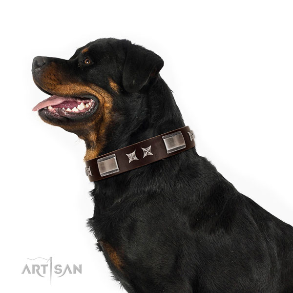 Adjustable collar of full grain leather for your attractive four-legged friend