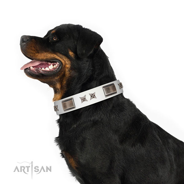 Decorated collar of genuine leather for your stylish doggie