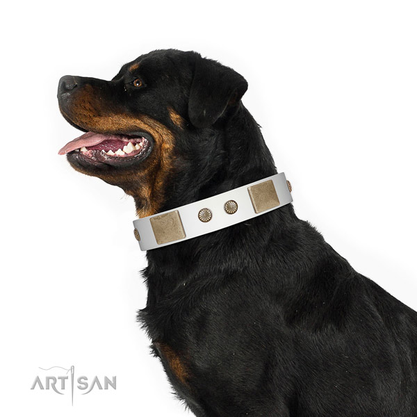 Rust-proof hardware on full grain genuine leather dog collar for everyday use