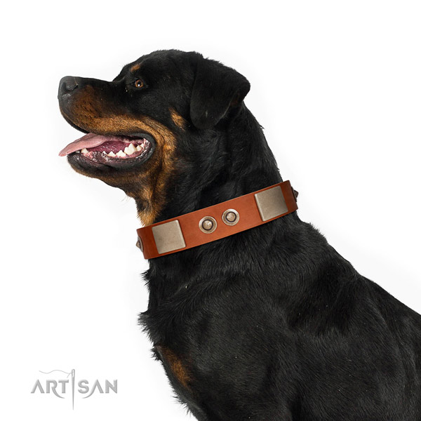 Corrosion proof D-ring on natural genuine leather dog collar for everyday use