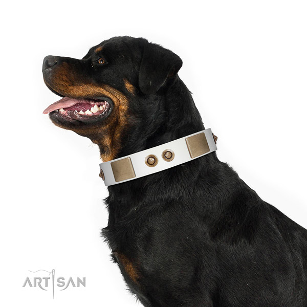 Daily use dog collar of natural leather with top notch decorations