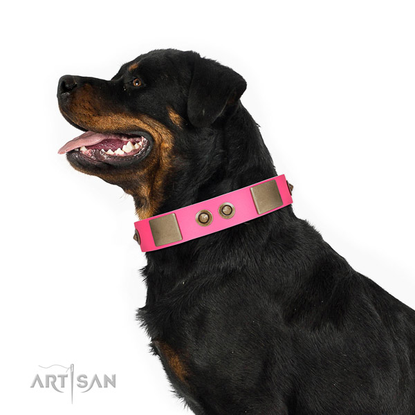 Handy use dog collar of natural leather with significant decorations