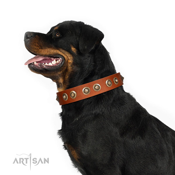 Stylish walking dog collar of natural leather with unique studs