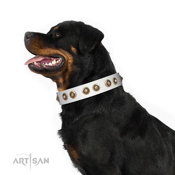 Everyday use dog collar of natural leather with trendy decorations