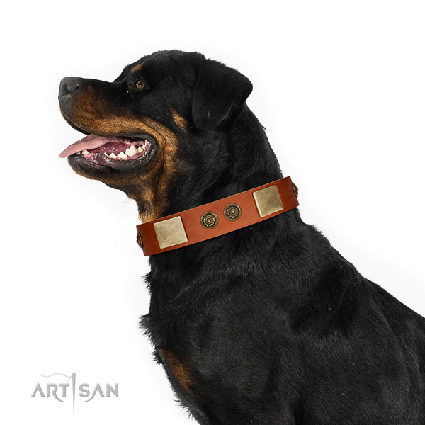 Extraordinary dog collar handmade for your impressive doggie
