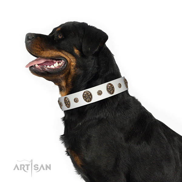 Walking dog collar of natural leather with stunning studs