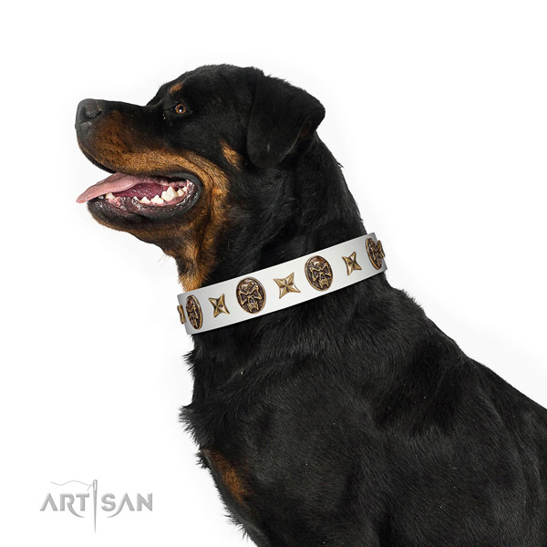 Awesome dog collar made for your lovely canine