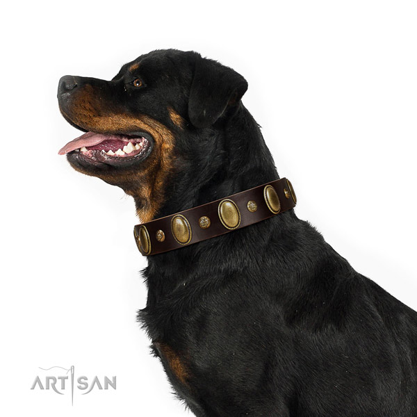 Full grain natural leather dog collar of soft to touch material with inimitable decorations