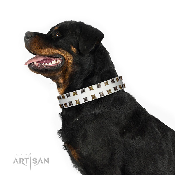 Best quality leather dog collar with adornments for your pet