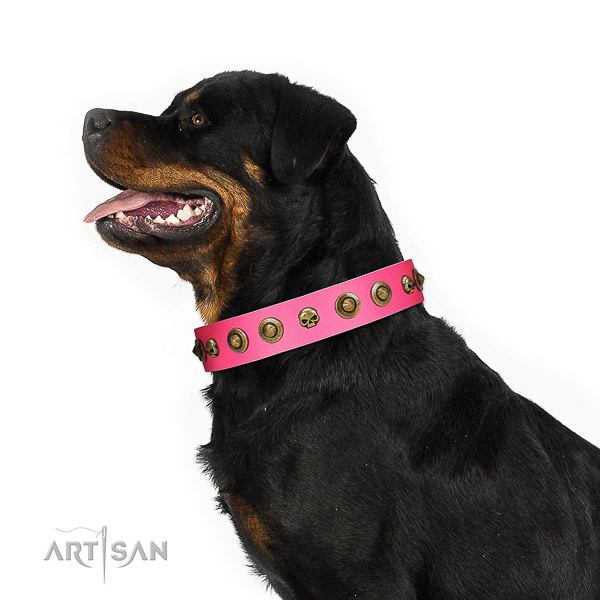 Trendy full grain natural leather dog collar with decorations