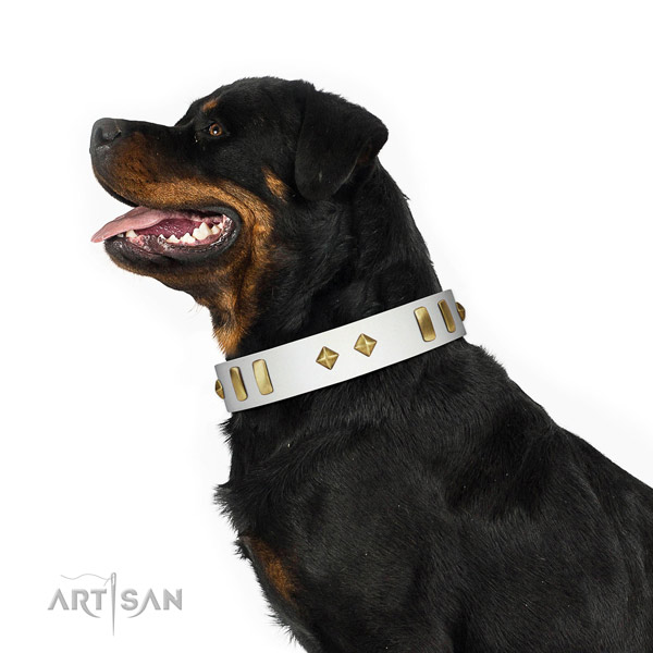 Everyday walking top rate natural leather dog collar with decorations