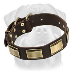 Firm Leather Rottweiler Collar     Equipped with Vintage Brass Buckle