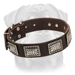 Decorated Walking Leather Dog Collar for Rottweiler