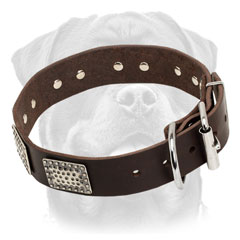 Awesome Leather Rottweiler Collar with Nickel-plated Plates