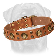 Leather Rottweiler Collar Decorated     with Brass Studs and Circles