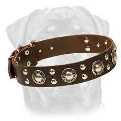 Leather Rottweiler Collar Decorated with studs and conchos