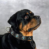Dog Collar Silver Plated Circles Blue Stones