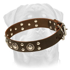 Firm Leather Rottweiler Collar Equipped with studs and conchos