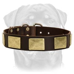 Custom made leather dog collar