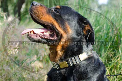 New-Fashion Leather Rottweiler Collar with Superb Decor