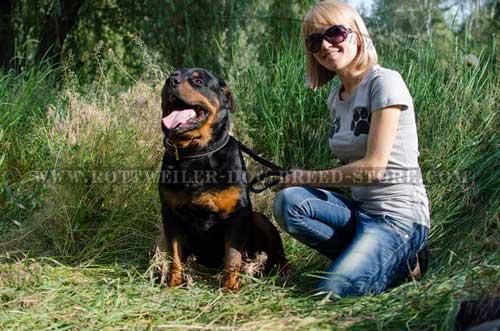 ... Nappa Padded Hand Made Elegant Leather Canine Collar for Rottweiler
