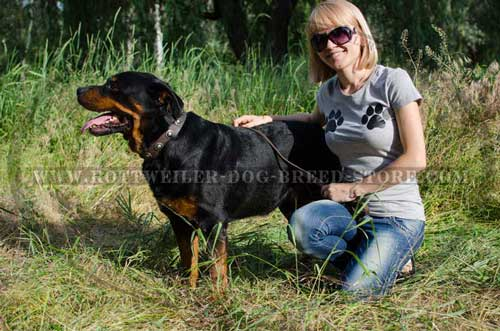 Exclusive Leather Dog Collar for Rottweiler Breed