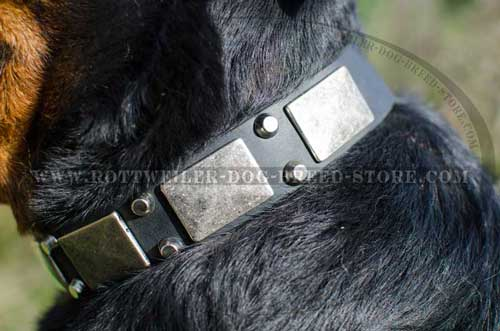 Hand crafted Leather Canine Collar with Nickel Finish