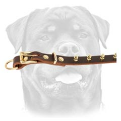 Nice leather dog collar with necessary width