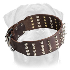 Leather     Rottweiler collar with nickel plated decoration