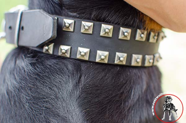 Designer leather Rottweiler collar
