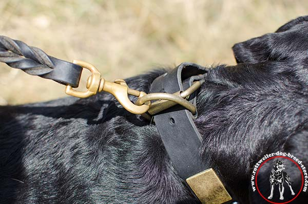 Rottweiler collar with D-ring for leash attachment