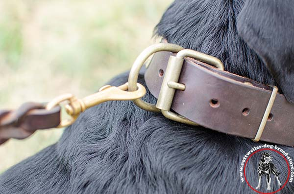 Rottweiler collar with sturdy fittings