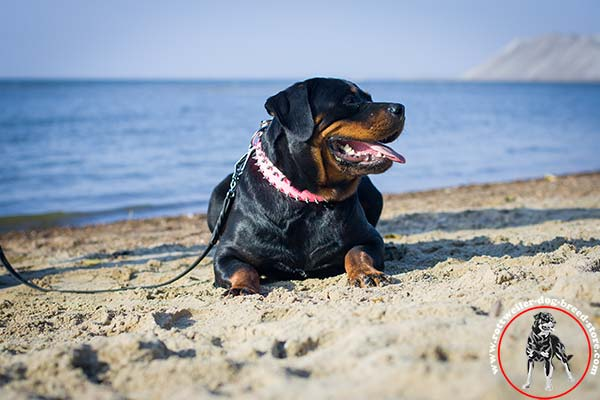 Quick to adjust pink Rottweiler collar