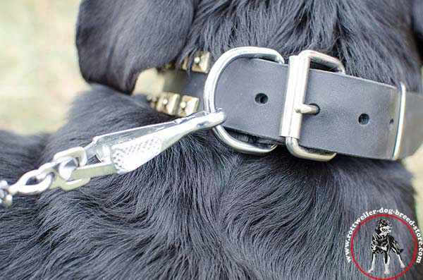 Rottweiler collar with nickel plated hardware