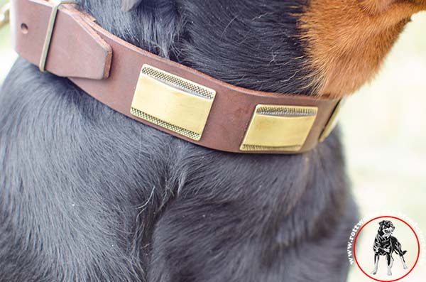 Rottweiler collar with brass decorations