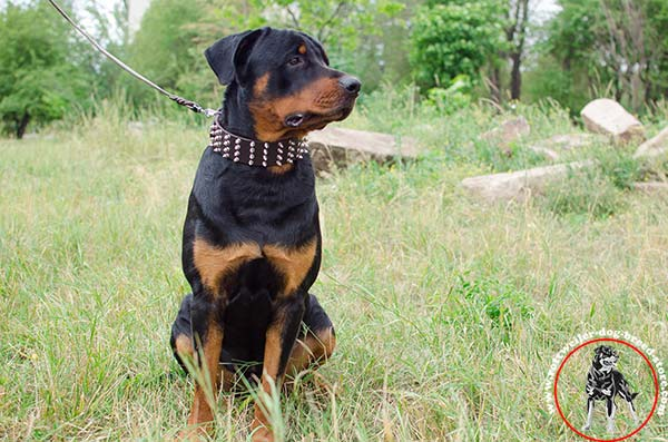 Rottweiler collar with 4 rows of hand set spikes