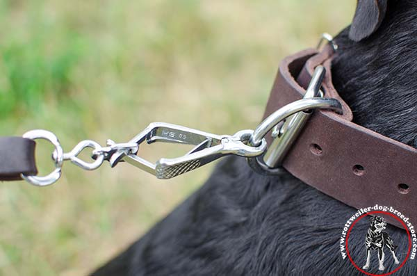 Rottweiler collar with D-ring for attaching a lead