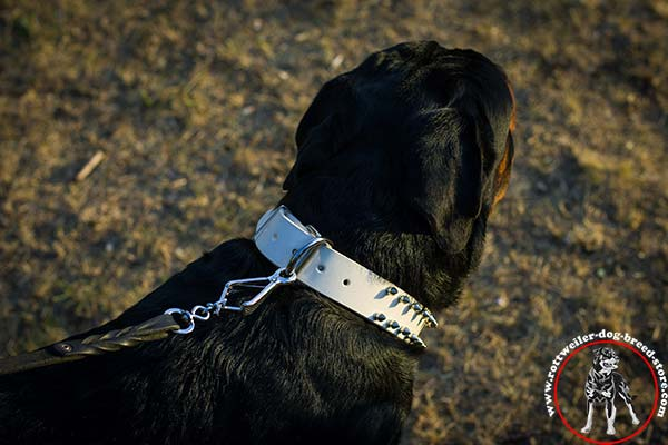 White Rottweiler collar with D-ring