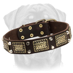 Rottweiler collar     with brass ornamentation