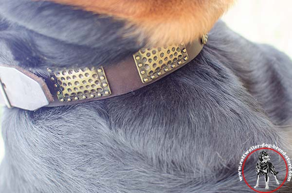 Rottweiler collar with rounded edges
