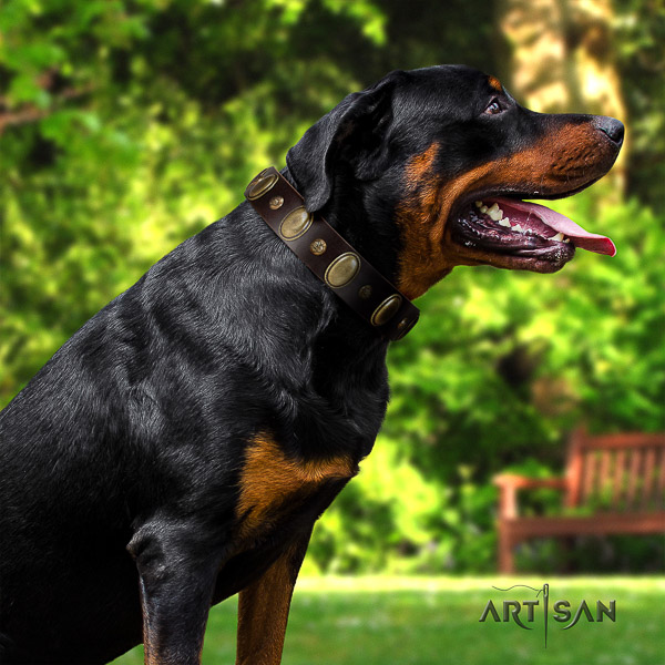 Rottweiler stylish walking leather collar for your beautiful four-legged friend