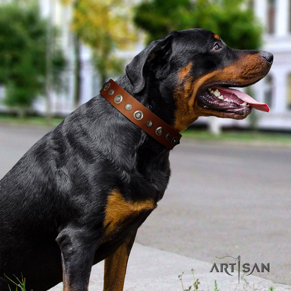 Rottweiler handcrafted collar with incredible studs for your doggie