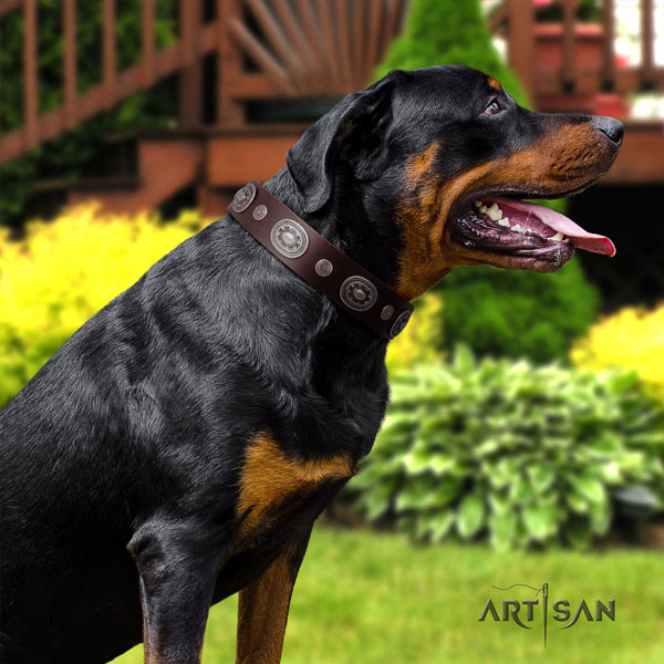 Rottweiler handcrafted collar with stunning decorations for your four-legged friend