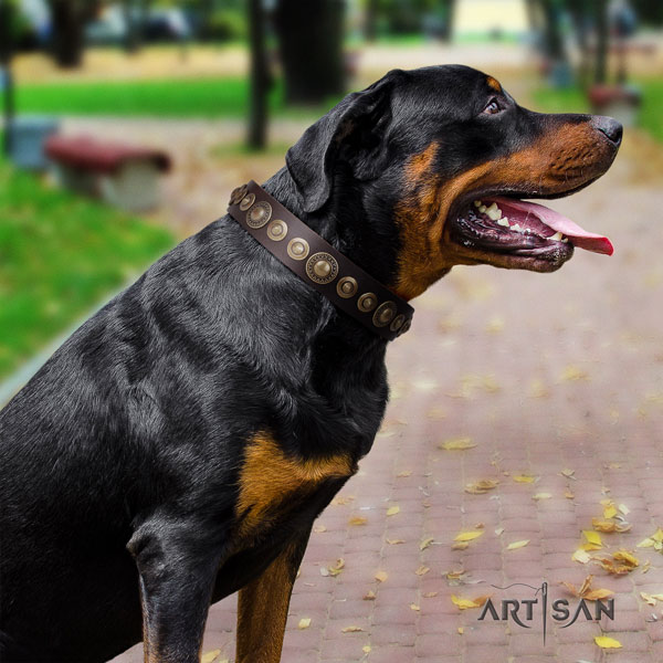 Rottweiler top quality collar with incredible decorations for your four-legged friend