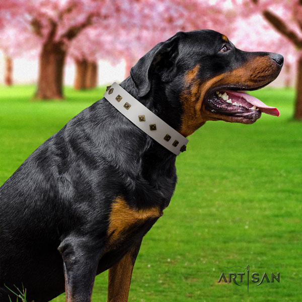 Rottweiler perfect fit collar with stunning embellishments for your dog