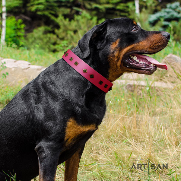 Rottweiler easy wearing collar with incredible adornments for your doggie