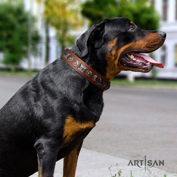 Rottweiler easy wearing collar with exquisite studs for your four-legged friend