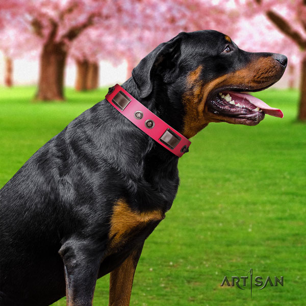 Rottweiler easy wearing collar with fashionable embellishments for your pet