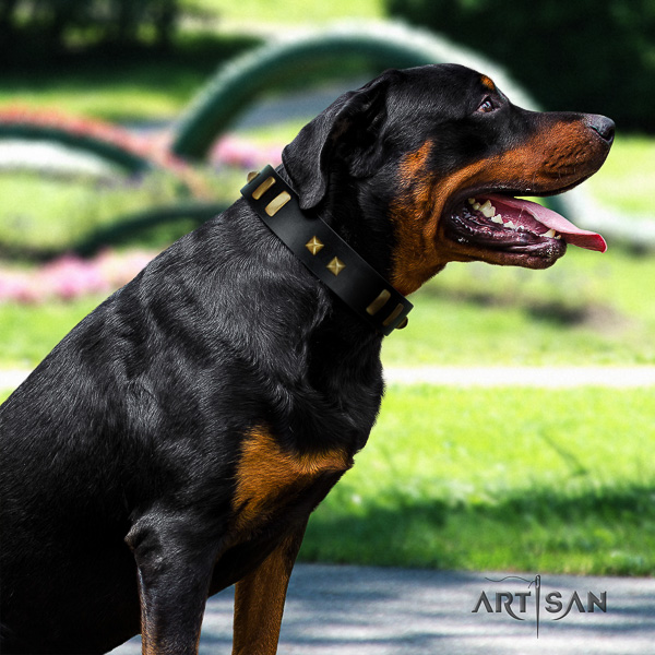 Rottweiler everyday walking genuine leather collar for your stylish canine